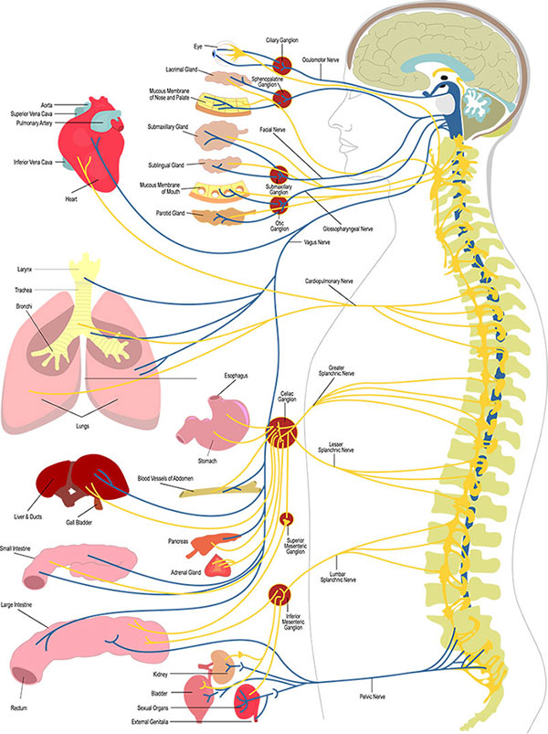 How principled chiropractic works at Reignite Chiropractic in Hoover, AL